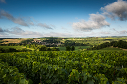 Landscape in the wine growing region of Chablis : Chichée © BIVB / IBANEZ A.